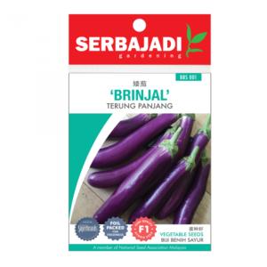 Serbajadi Brinjal Seeds
