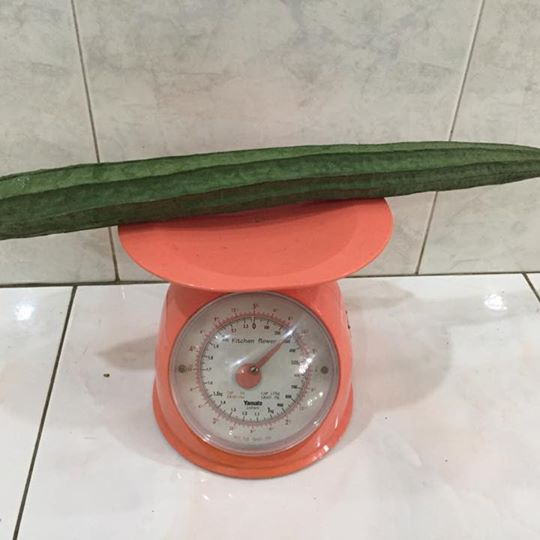MY Vegetable Patch homegrown angled loofah