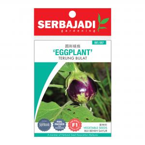 Serbajadi eggplant seeds