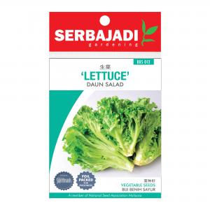 Serbajadi lettuce seeds