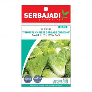 Serbajadi tropical Chinese cabbage ong king seeds